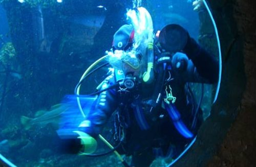 aquarium Macduff