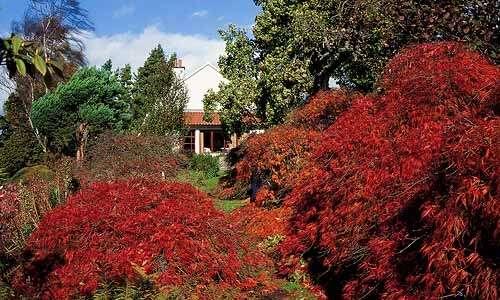 El Jardín Branklyn en Perth
