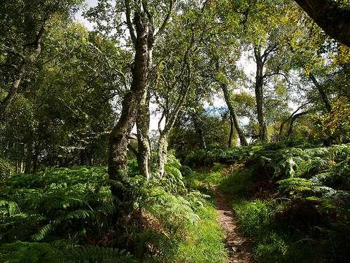 Parque Nacional de Cairngorms